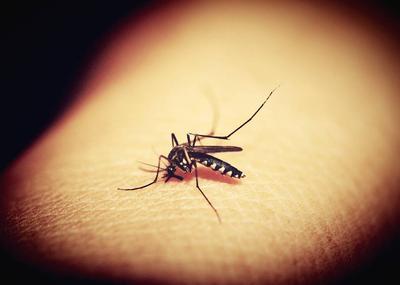 牛皮癣患者夏季怎样防蚊虫